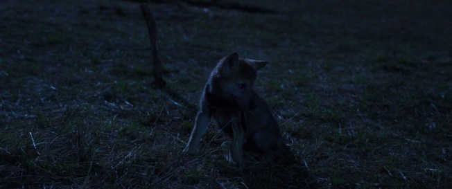 Wolf.Totem.2015.720p.BRRip.1GB.MkvCage.mkv_snapshot_01.00.57_[2016.04.05_21.37.41]