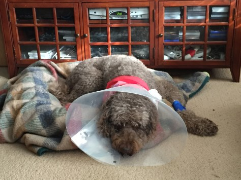 Jake recovering