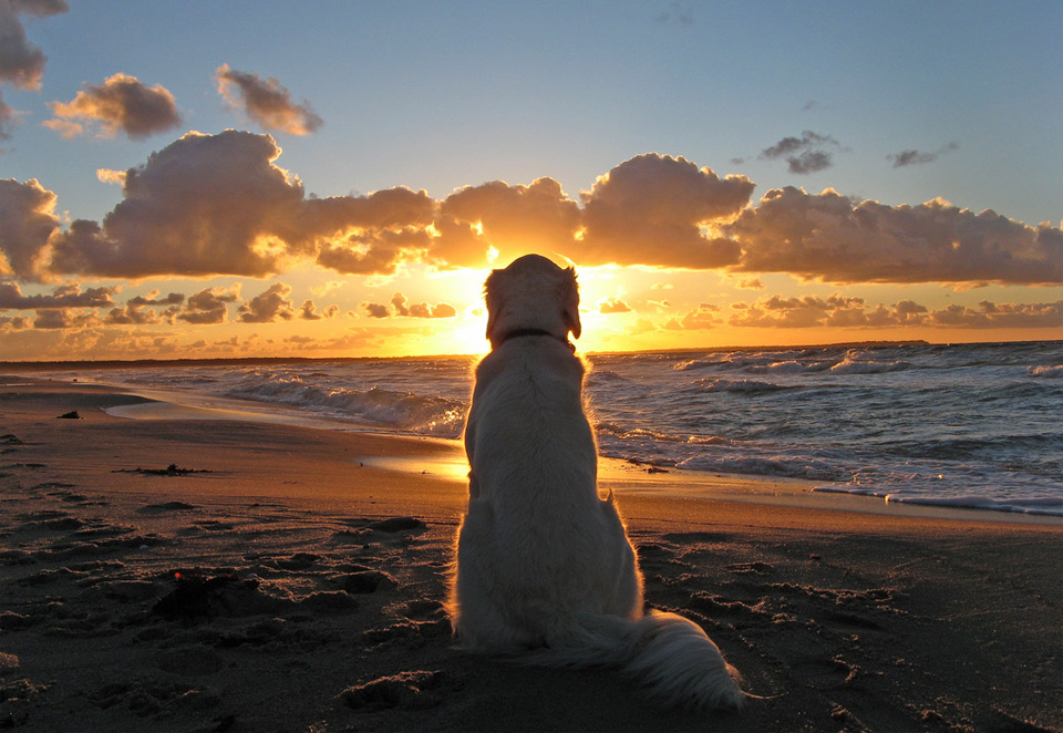 dog enjoys a beautiful sunset