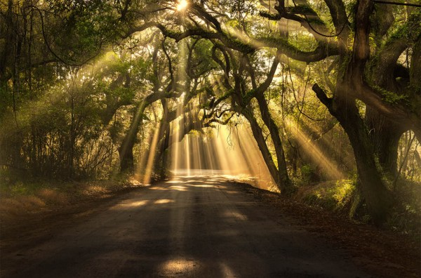sun rays shining through trees photo | One Big Photo