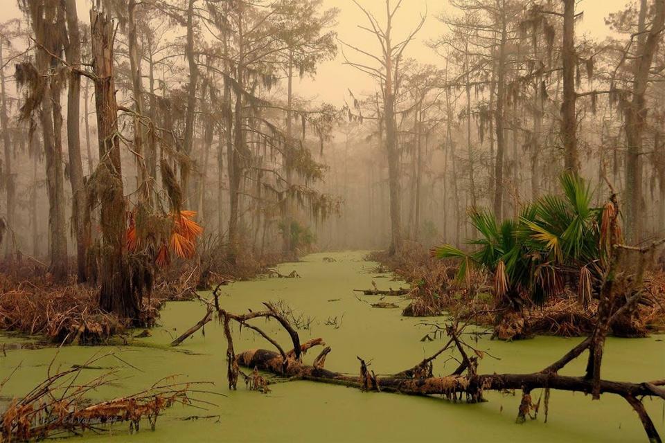 Image result for swampland