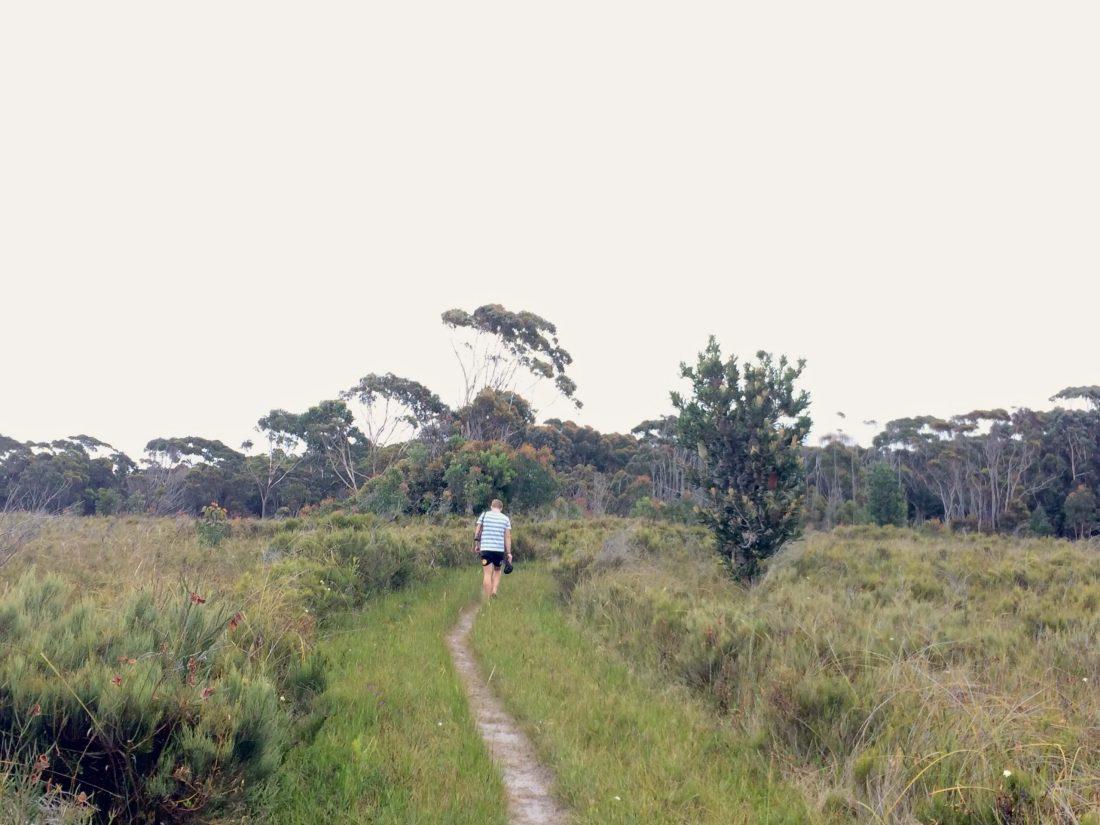 Shipwreck Creek walking trail Australia