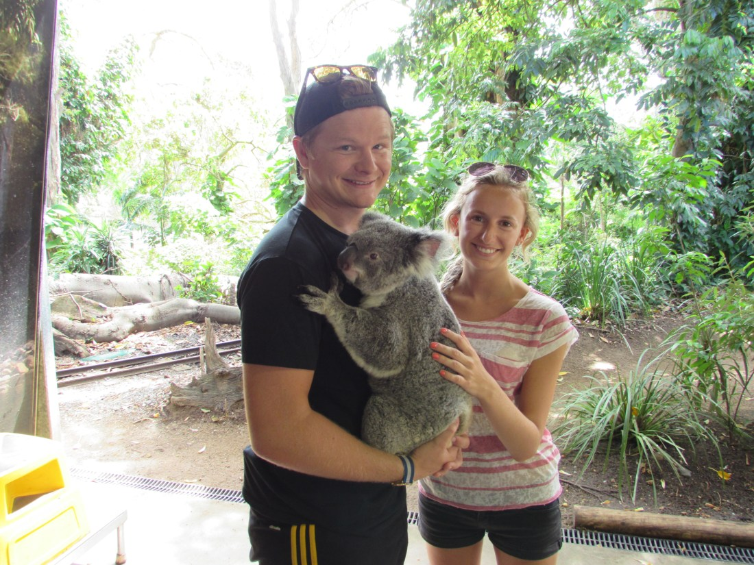 Koala Cuddling at Currumbin Wildlife Sanctuary