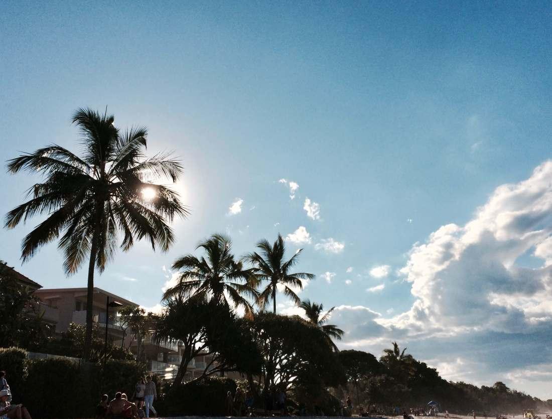 Palm trees at Noosa Beach
