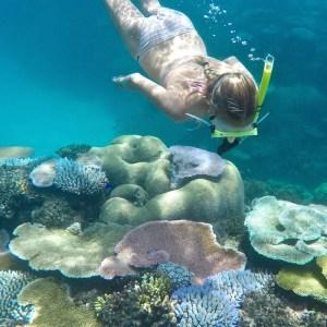 Octopus Resort Featured Image