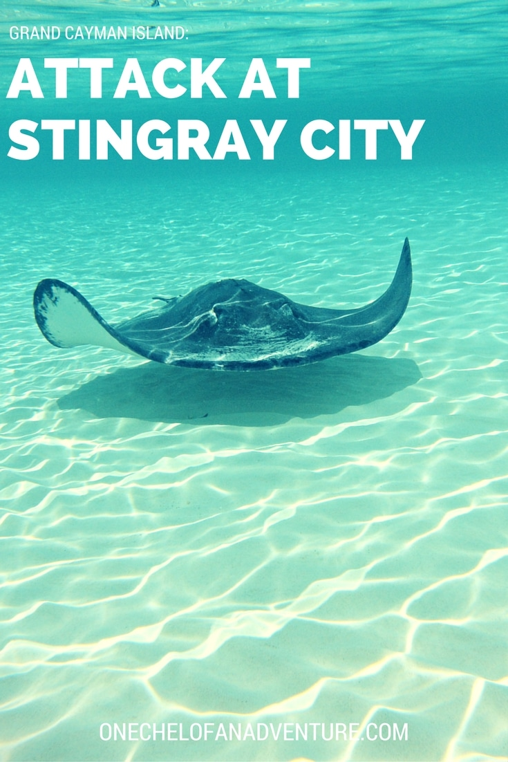 Attack at Sting Ray City, Grand Cayman
