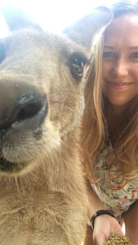 Kangaroo Selfie