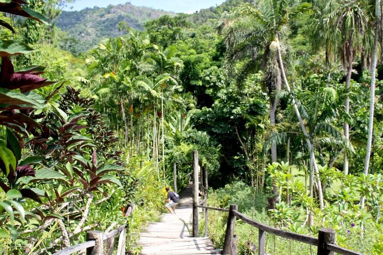 A Fiji Must: Garden of the Sleeping Giant   Orchid Garden