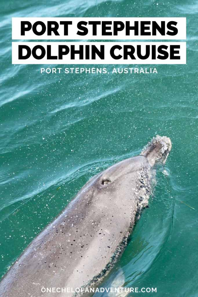 Dolphin Cruise at Port Stephens