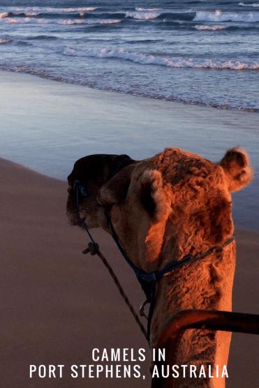 CAMEL-RIDE-SUNSET