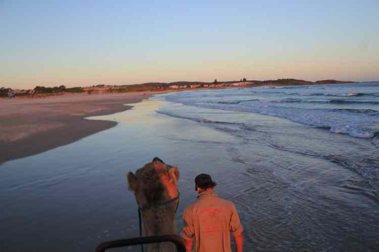 Sunset camel ride Birubi Beach Anna Bay Port Stephens