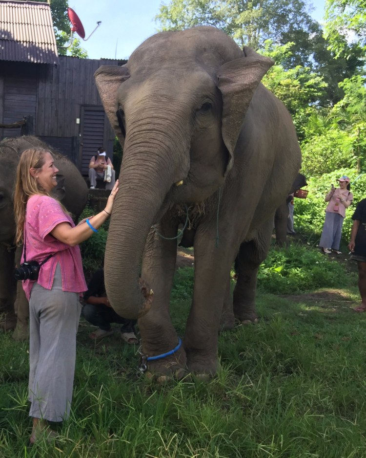 seeing elephants up close in thailand