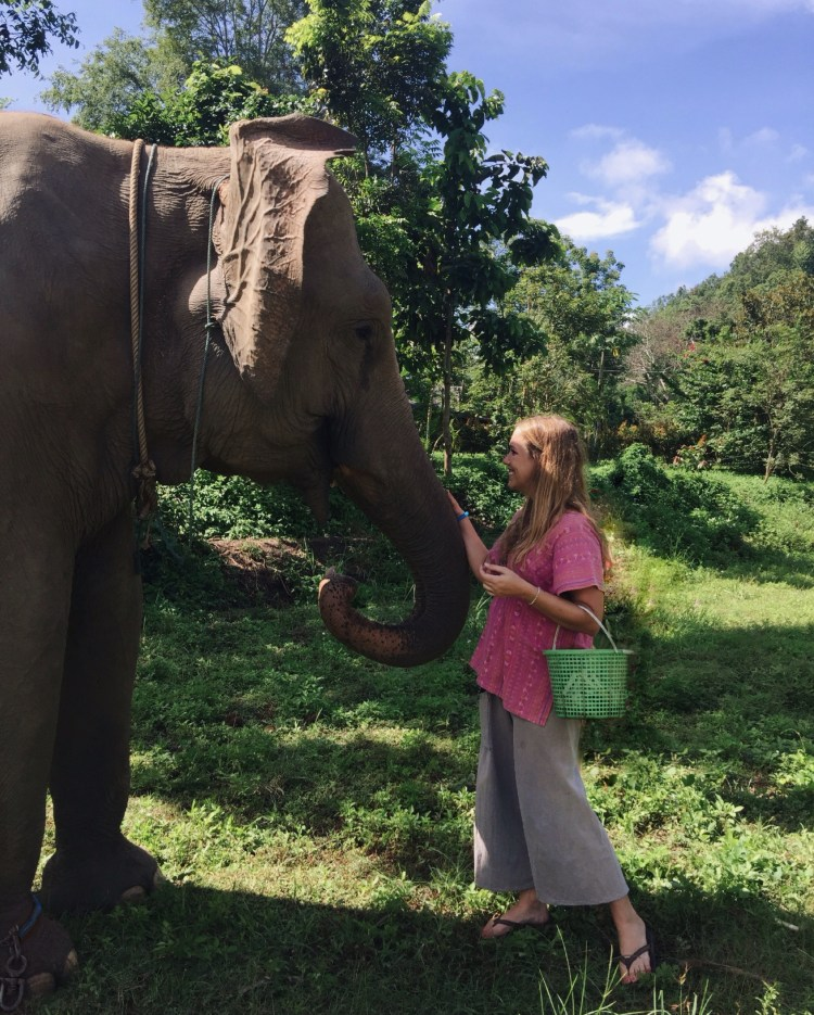 See Elephants responsibly in Thailand