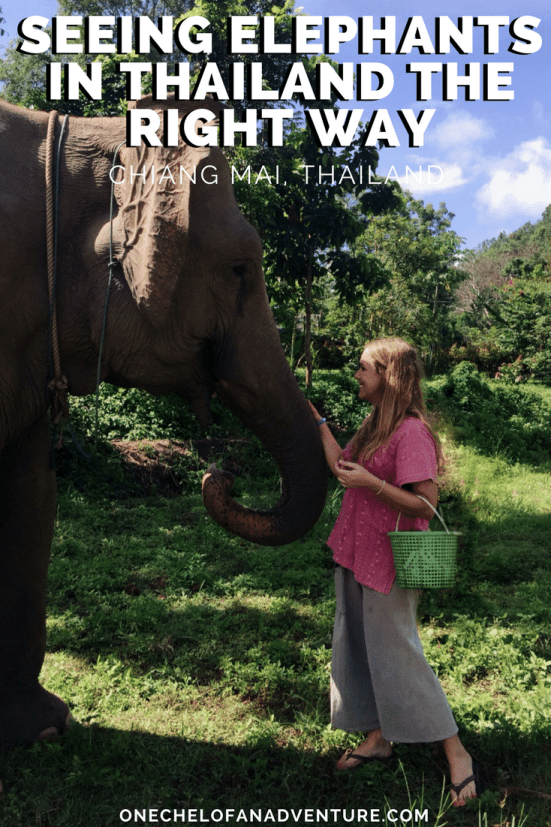 Seeing Elephants in Thailand the Right Way - Responsible Animal Tourism | CHIANG MAI, THAILAND