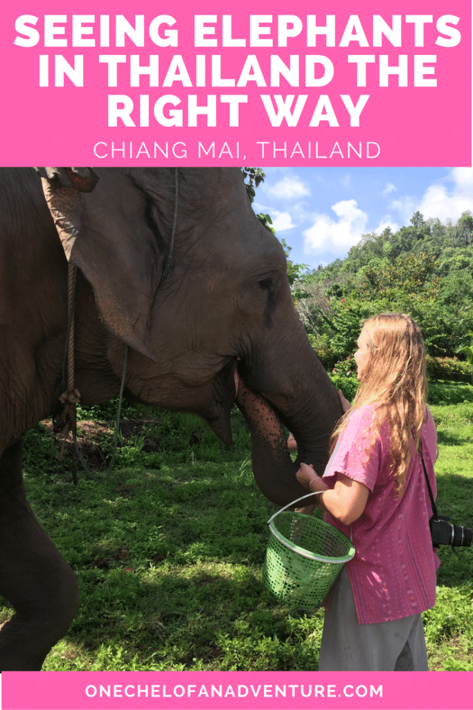See Elephants Responsibly in Chiang Mai