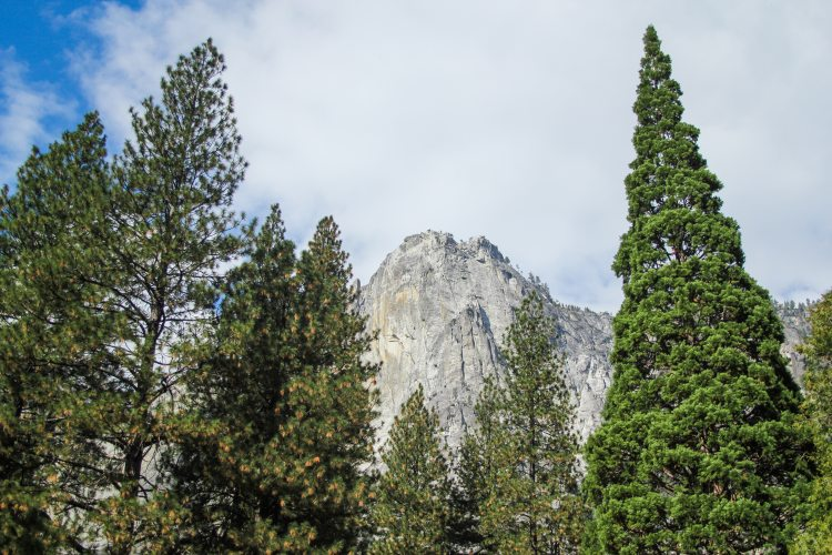 Yosemite Valley Drive Landscapes
