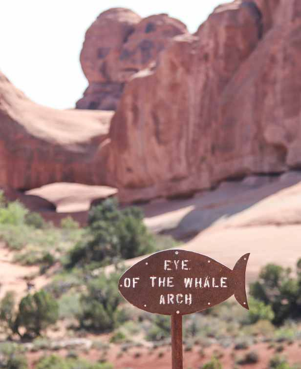 1-Day Tour of Canyonlands and Arches National Park | Moab, Utah