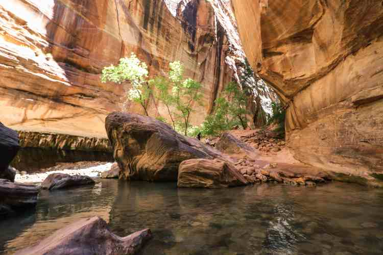 Hiking The Narrows - Zion National Park-6974