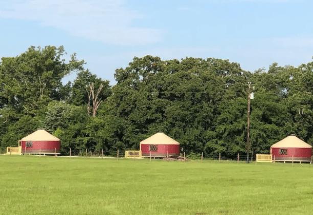 Wildflower glamping Yurts near Dallas