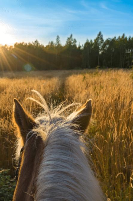 horseback riding - Fall Travel Bucket List