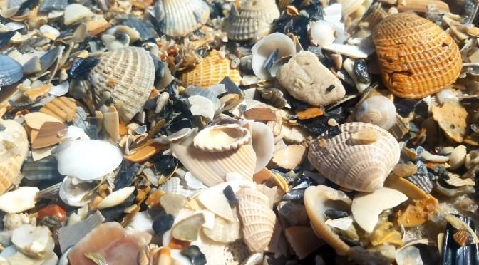 Gulf Shores State Park 2019 onechristianman.com