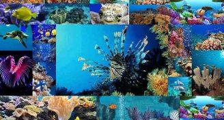 Marinebiology