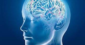 Cervello differenze ideologia gender 970x661