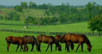 Horses in field 5