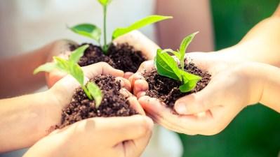 plants-ecology-lesson-plans_522149_large