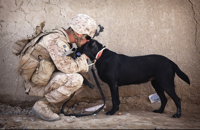 Army person with a dog