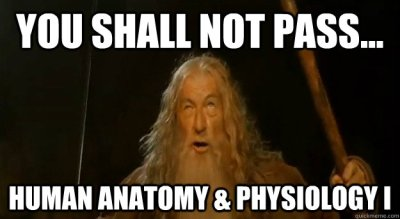 A funny image of Human Anatomy and Physiology 1
