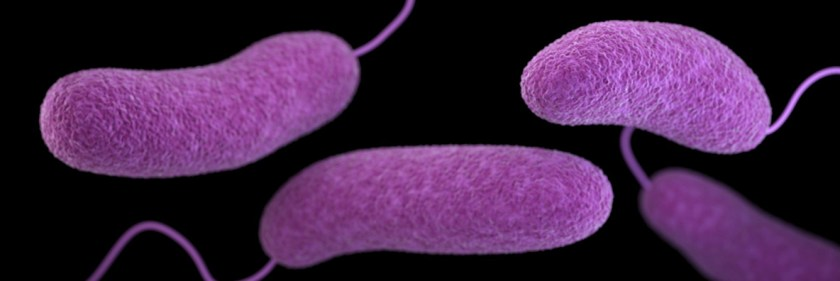 Microbial cells