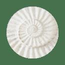 white-shell