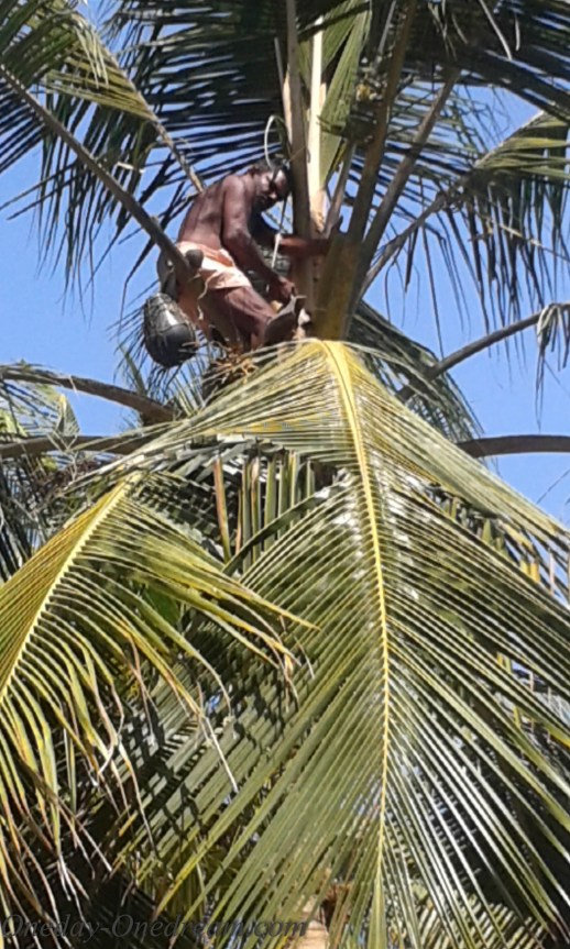 coconit