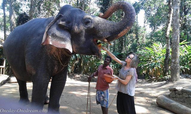elephant-in-india