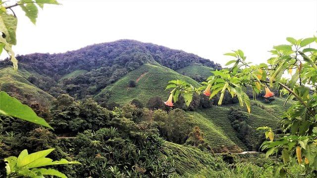 plantations-the-malaisie