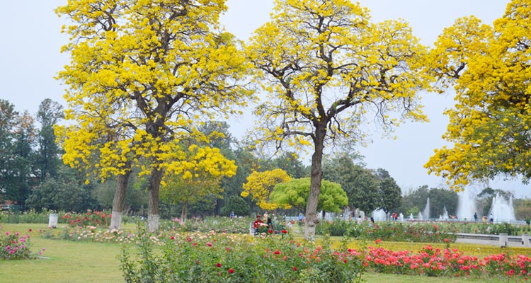 One Day Chandigarh Local Sightseeing Trip by Car Rose Garden