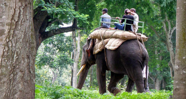 One Day Mysore to Coorg Trip by Car Kaveri Nisargadhama Forest Park