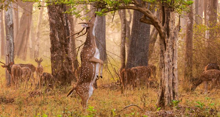 One Day Mysore to Madikeri / Nagarhole Jungle Safari Trip by Car Flora @ Nagarhole National Park