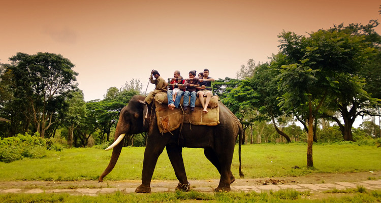 1 Day Coimbatore to TopSlip Tour by Cab Elephant Safari TopSlip