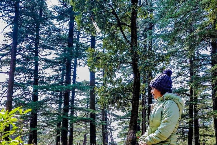 Package Glimpse 1 Day Dharamshala Local Sightseeing Tour by Cab