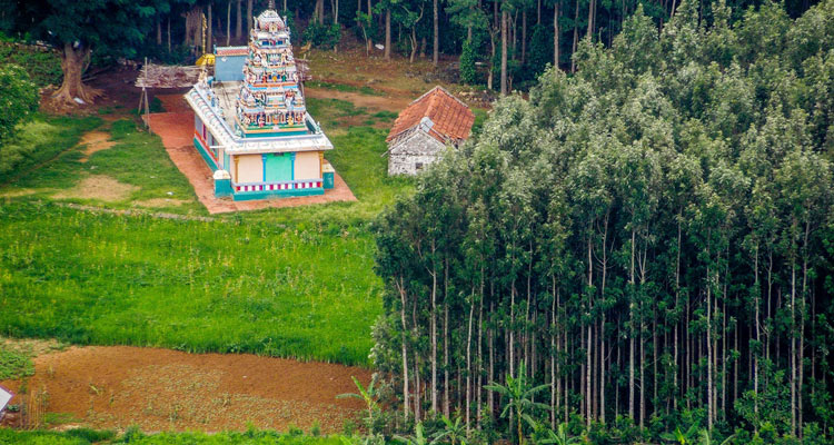 1 Day Coimbatore to Yercuad Tour by Cab Servarayan Temple