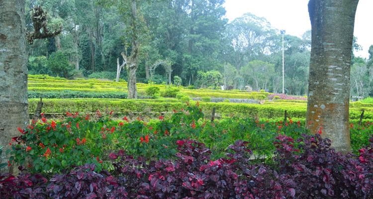 1 Day Coimbatore to Yercuad Tour by Cab Silk Farm \ Rose Garden