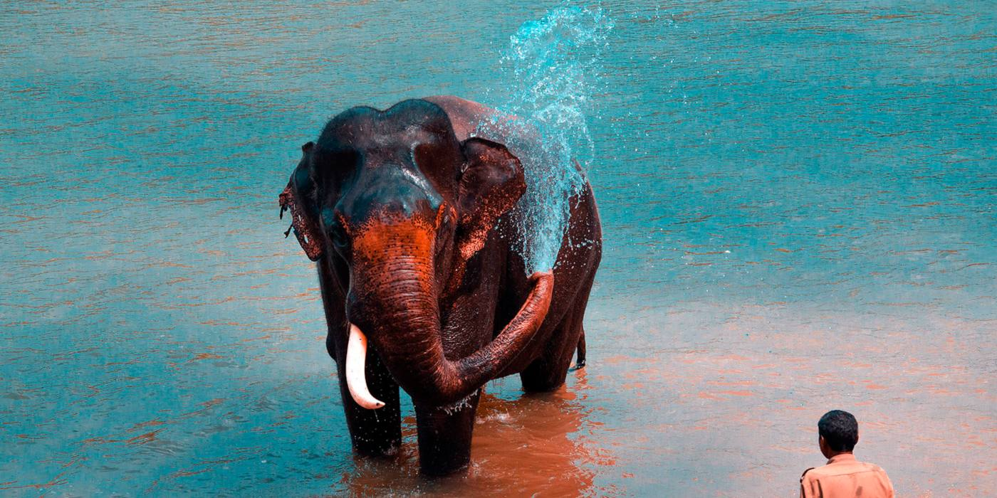 1 Day Coorg Local Sightseeing Tour with Dubare Elephant Camp by Cab Header