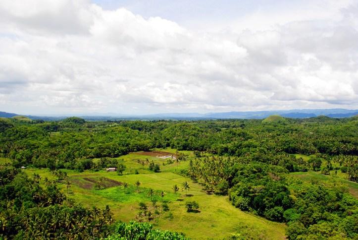 Lush Nature in Bohol