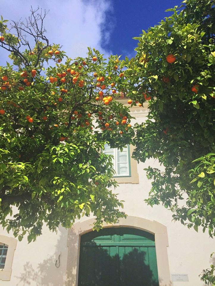 Orange Trees Faro