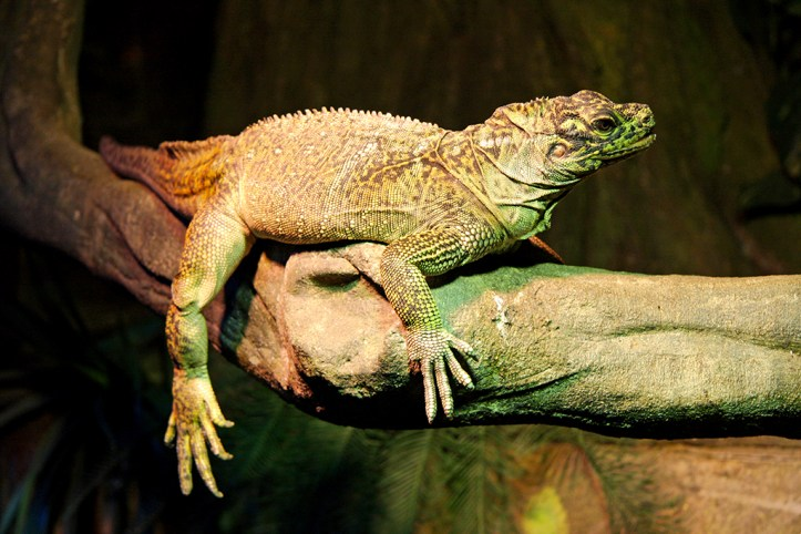 Australian Reptile Park, Central Coast