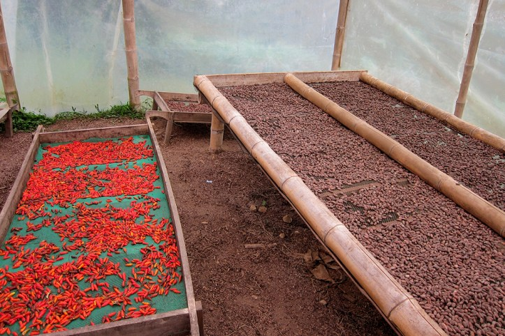 Chocolate production, Mindo