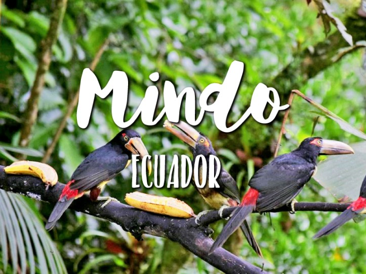 One day in Mindo itinerary