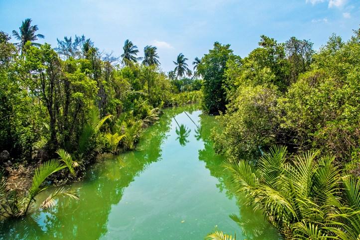 Lush nature of Koh Lanta